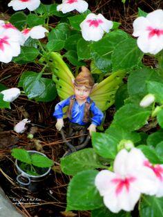 Fairy tending impatiens.(Garden of Len & Barb Rosen) http://ourfairfieldhomeandgarden.com