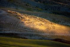 In morning light ... by Marcin Sobas