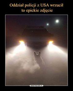 Oddział policji z USA wrzucił to epickie zdjęcie Best Memes, Funny Memes, Jokes, Really Cool Photos, Komodo Dragon, Make Smile, Looks Cool, Illusions, Fun Facts