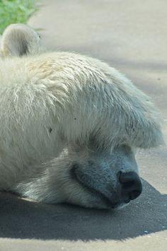 Polar Bear by Truus & Zoo