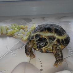 Мой черепах )