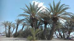#Vai #Crete #Myjobisbetterthanyours #replife #palmtrees #littlepie eofparadise