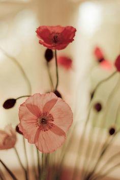 < Non penso a tutta la miseria, ma alla bellezza che rimane ancora....>  Anna Frank