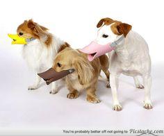 Ducky protective dog muzzles