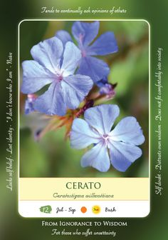 Bach Flower Cards - CERATO