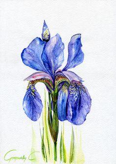 Iris, Blue iris, Flowers, Watercolor Original Painting from the Artist #Realism