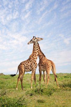 Wildlife and Warriors - David Lazar