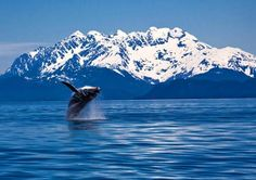 Whale watching in #Alaska