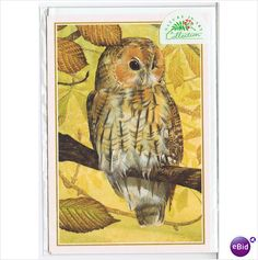Tawny Owl All Occaision/Blank Greetings Card on #eBid United Kingdom