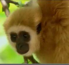 #video #videoizle #çilginmaymun #yavrukaplanlar #komikvideo Çılgın Maymun ve Yavru Kaplanlar