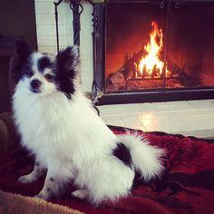 #snowstorm #fire #fireplace #blizzardjonas #jonas #jonasdoggy #theblizzardof2016 #myfirstblizzard #winter #Pomeranian #pomlove #instadog #instapom #pompom by londoncharlespthepom