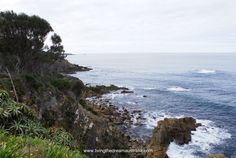 Eden, a whale of a port. Great history, fantastic views. http://www.livingthedreamaustralia.com/index.php/2015/12/11/eden-a-whale-of-a-port/ #Elddis #Eden #NSW #SeeAustralia