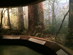 American Museum of Natural History - Wikipedia, the free encyclopedia