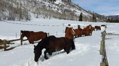 The gang led by Knight trouncing through the snow at the Elk River Guest Ranch on a bluebird day!