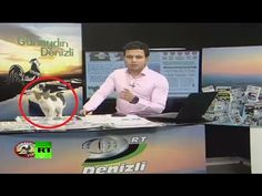 Stray Cat Crashes Live TV Broadcast To Take A Nap On Warm Laptop And Gets Himself A Home