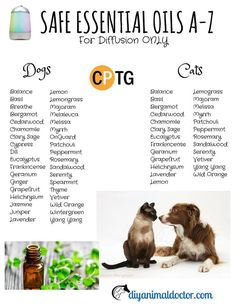 Let's be sure to keep our furry family members safe- this is a great list of essential oils that are safe for DIFFUSING with dogs and cats. via diyanimaldoctor.com