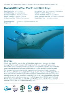 CMS CoP11 Fact Sheets #ProjectAWARE - Mobulid Rays Reef Manta and Devil Ray