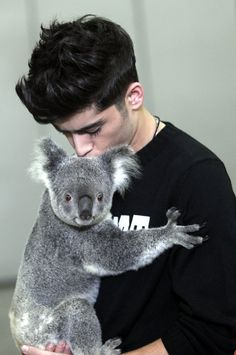 Zayn Malik of One Direction with a koala bear <3