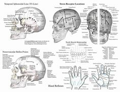 Applied Kinesiology Chart for Chiropractic Acupuncture