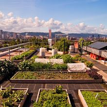 The Noble Rot has one of the most amazing rooftop gardens we've seen!  Talk about farm to table!