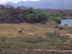 Mpumalanga Tourism and Parks Authority Songimvelo #EcoWildRoute