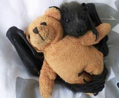 I love bats... except for the 3rd snub nosed one.  He's kinda freaky.