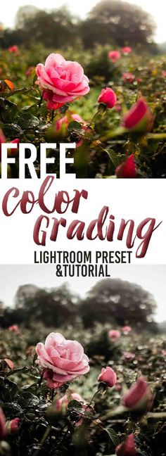 Color Grading Tutorial and Free Lightroom Preset