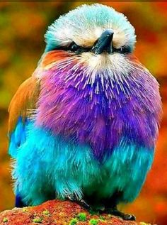 Wow, all the colors!