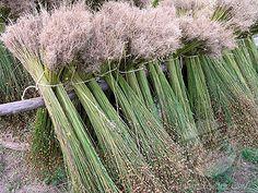 Harvested flax bundles  Toutes les étapes avant de filer le lin... j'adorerais !!!