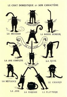 French cat poster