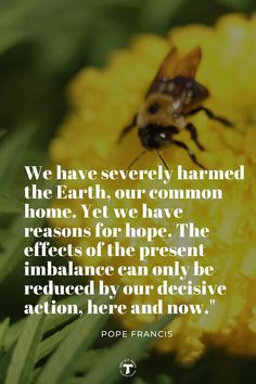 There is still hope! Take care of our Common Home. Every little step in cleaning up the environment is helpful. Here And Now, Pope Francis, Social Justice, Environment, Life, Cleaning, Home Cleaning