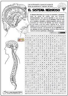 Sistema nervioso                                                       …
