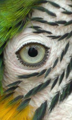 (via CREATIONS VEGETALES ANIMALES / Parrot's Eye by *hellsDragonWolf)