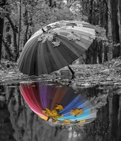 28 Ideas Photography Black And White Rain Color Splash Splash Photography, Color Photography, Creative Photography, Amazing Photography, Nature Photography, Black And White Portraits, Black And White Pictures, Color Splash Photo, Splash Of Color