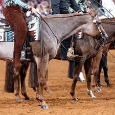 Great color scheme for a red roan Horse Girl, Horse Love, Crazy Horse, Western Riding, Western Tack, American Quarter Horse, Quarter Horses, Western Show Clothes, Western Pleasure Horses