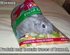 Warning Product May Contain Traces of Bunny