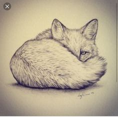 I really want a fox tattoo on my ribs one day. by elinor I really want a fox tattoo on my ribs one day. by elinor Fox Drawing, Drawing Sketches, Drawing Ideas, Sketching, Drawing Board, Fox Sketch, Cute Animal Videos, Christmas Drawing, Fox Art
