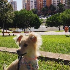 Peitoral croche - Faça voce mesma ....Piper Brazil - Born 09/14/2014 #srd #viralata #adote #mutt #mongrel #funnydog #cachorro  #doglovers #instalata #pets  #instadog  #petsgram #dog  #instapet #instasweet  #dogofinstagram  #cooldog #crazydog #doglife #dogcutepics  #rescuedog  #ilovemydog  #pix_mania  #photooftheday #my_flagrants