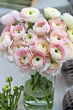Oh to get a bouquet of Pale Pink Cloni Ranunculus Fresh Flowers, Spring Flowers, Beautiful Flowers, Exotic Flowers, Purple Flowers, Wild Flowers, Flowers Vase, Deco Floral, Pale Pink