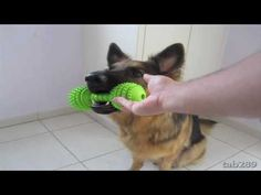 Dog Training Tutorial: Holding Objects & Clean Up! -shaping the hold, the drop, the drop into a bucket, the drop into bucket from a distance