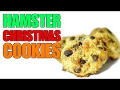 Some of our viewers who celebrate Christmas asked if we would post a themed video for them so we really hope you enjoy! Hamster Diy Cage, Hamster Food, Hamster Life, Hamster Treats, Pet Treats, Hamster Stuff, Gerbil, Hamsters, Rodents