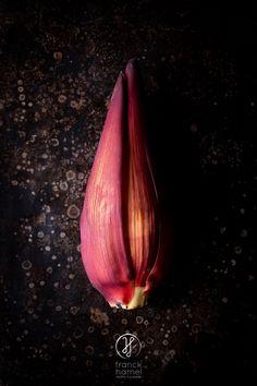 Banana flower  #fruit #foodphotographer #exoticfruit #banana #flower