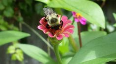 3 Things To Do When Creating A Bee Friendly Garden