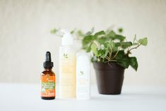 """Sea Buckthorn: The """"Almighty Wonder Oil"""", Importance of Bioflavononids — Sunflower & Fig Liquid Gold, Fig, Seeds, Ficus, Figs"""