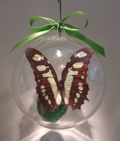 """Metamorphia stelenes"" from Argentina 80mm clear ornament $15.00....... 100mm clear ornament $20.00 US"