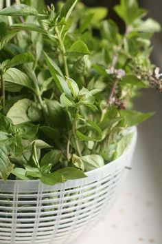 Freezing Fresh Basil and Other Herbs
