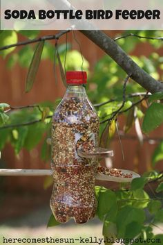 20+ Unique Bird Feeders - Lots Of Beautiful Bird Feeders