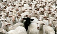 Be the black sheep!