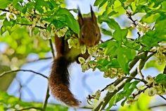 'Eichhörnchen 4' von toeffelshop bei artflakes.com als Poster oder Kunstdruck $17.33