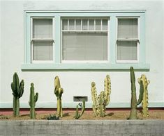 Buy Original Art by Mark Yaggie | photography | Cacti Study at UGallery